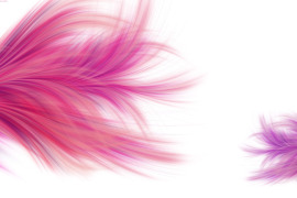 pink-feather-background-wallpaper-simple-pink-background